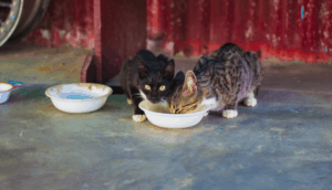 Eating Pet Foods – dog food, Can cats eat dog food?