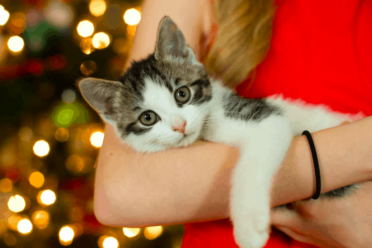 Top 100 best cat names for Male and Female pets from 2021
