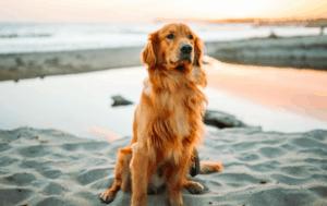 female dog names 2020