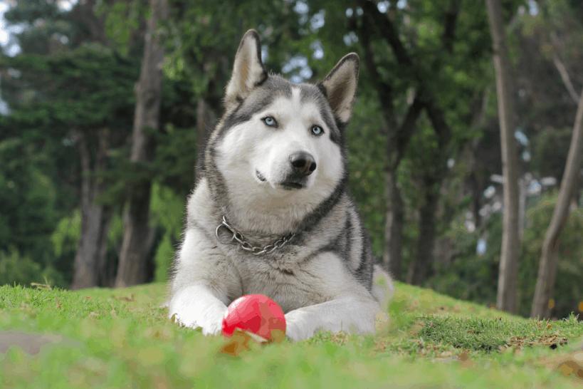 dog resting on grass