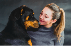 The Rottweiler Dog History, Breed, Diet, Cost, Size, Training