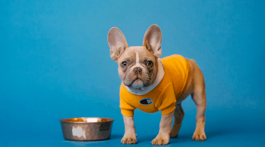 The French Bulldog Price, Diet, Health, Training and History