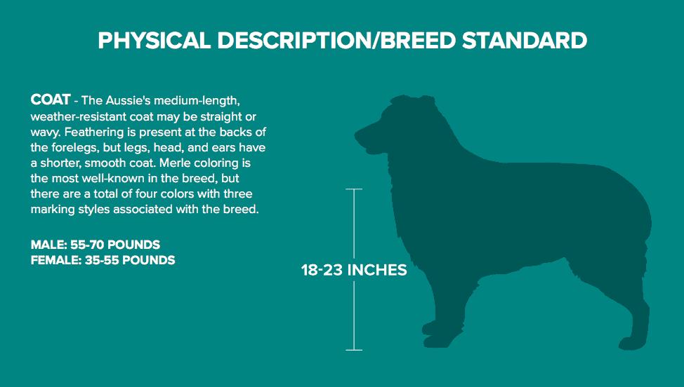 Australian Shepherd Description and Diagram