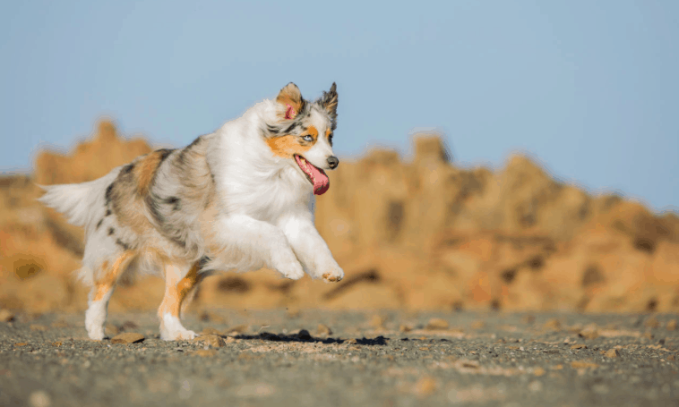 See pictures of All Dog Breeds pictures and their names from A to Z