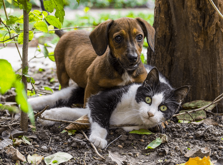 Top 7 Reasons Dogs Are Better Than Cats