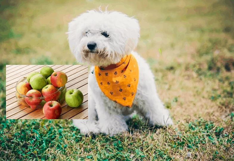 Can Dogs Eat Apples? - Top 12 Fruits dogs can and can not eat