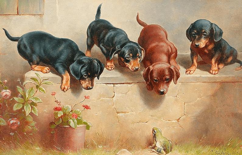 Dapple Dachshund puppies
