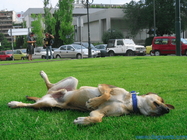 what do dogs do when they are about to die