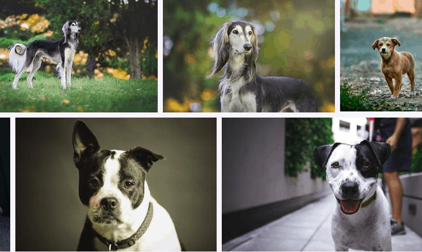 Top 193 Most Popular Dog Breeds in 2021 – DogsVets.com