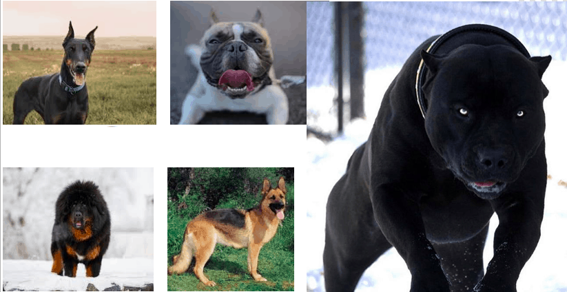 Top 24 most dangerous dogs in the world 2020 – 2021 (with Photos)