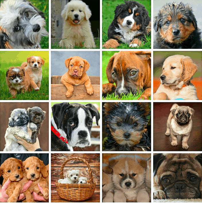 How many dog breeds are there in world 2020
