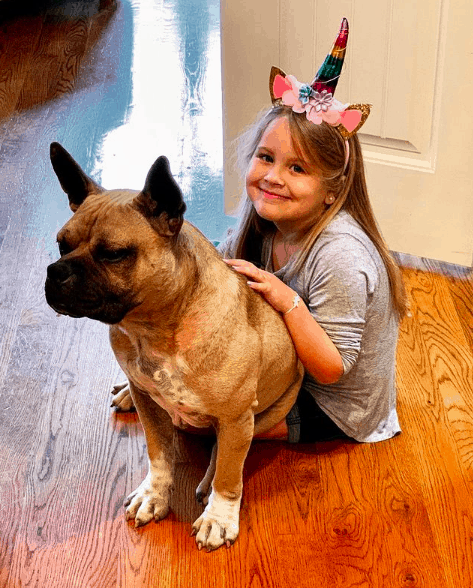 Are French Bulldog Mix good for family