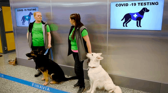 Helsinki, Finland Airport uses sniffer dogs to detect the coronavirus