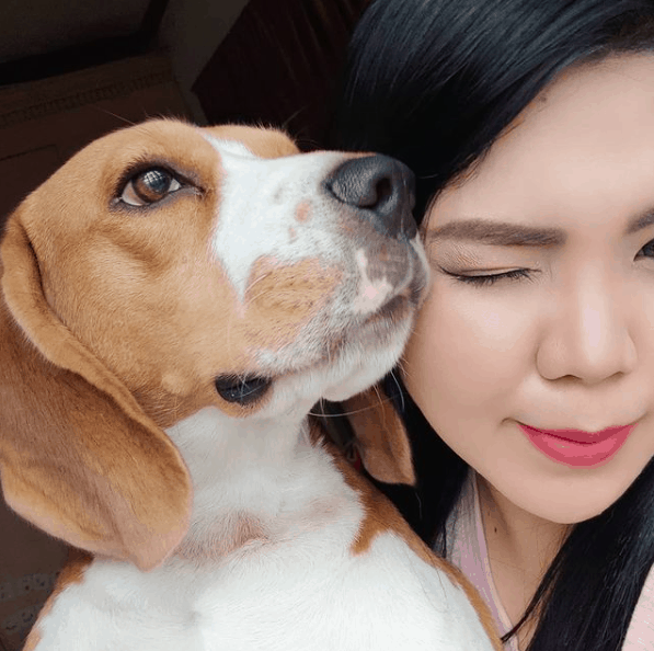 how much do beagle puppies cost