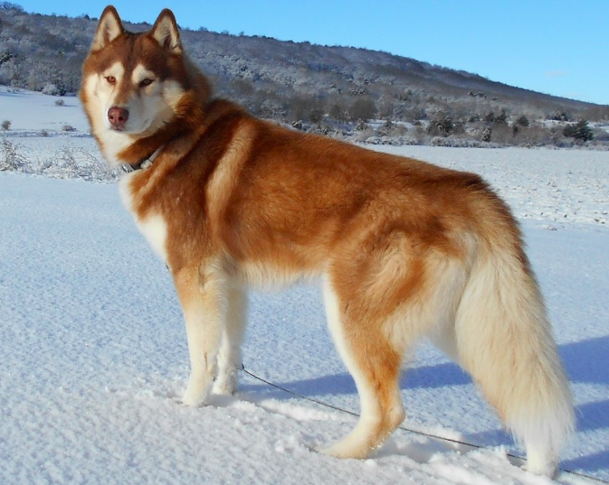 finding the perfect dog names for huskies