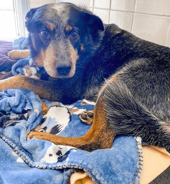 Baby dog found protecting and lying on dead owner's chest