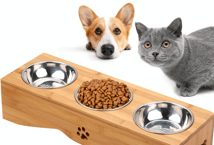 can cat eat dog food