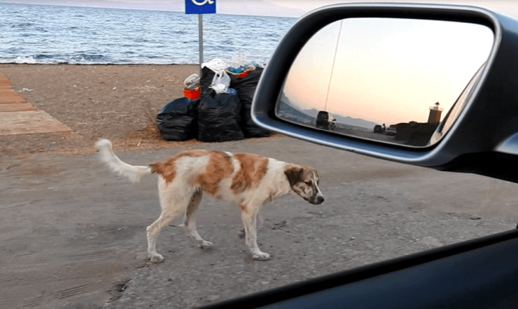 rescues a lonely stray dog