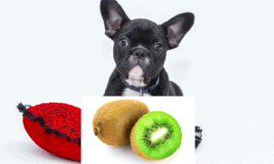 Can Dogs Eat Kiwi Fruit? – 10 shocking facts you need to know