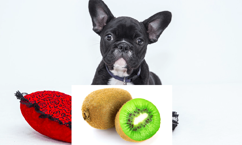 Can Dogs Eat Kiwi Fruit? - 7 shocking facts you need to know