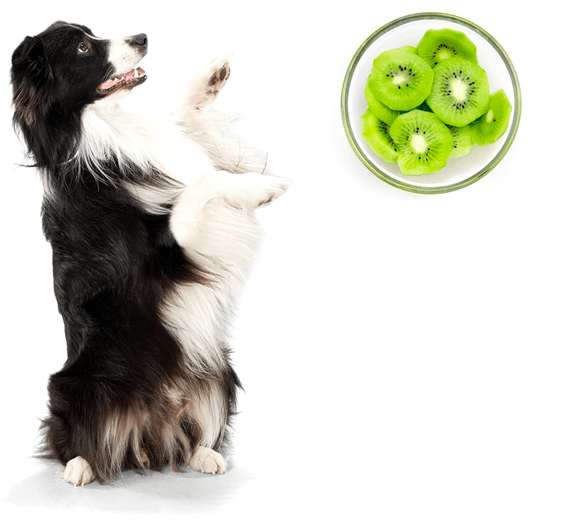 can dogs eat kiwi safely