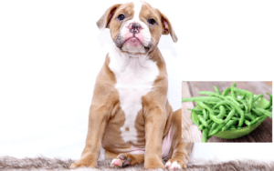 Can dogs eat green beans? – 8 shocking facts you need to know