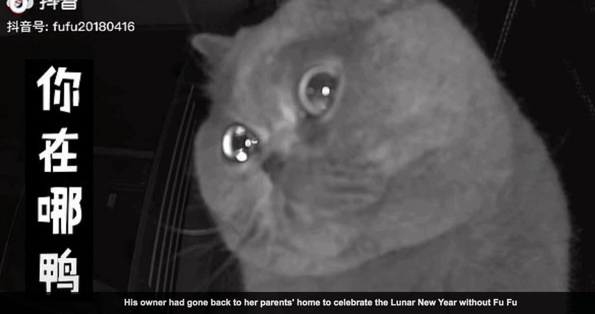 fu fu the cat cry into security camera