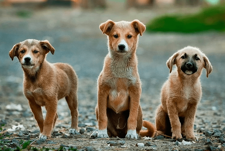 cute names for pets female