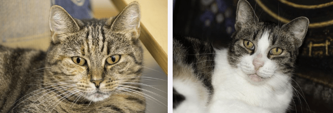 cute names for pets cats