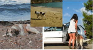 Woman rescues a lonely stray dog she had found on a beach