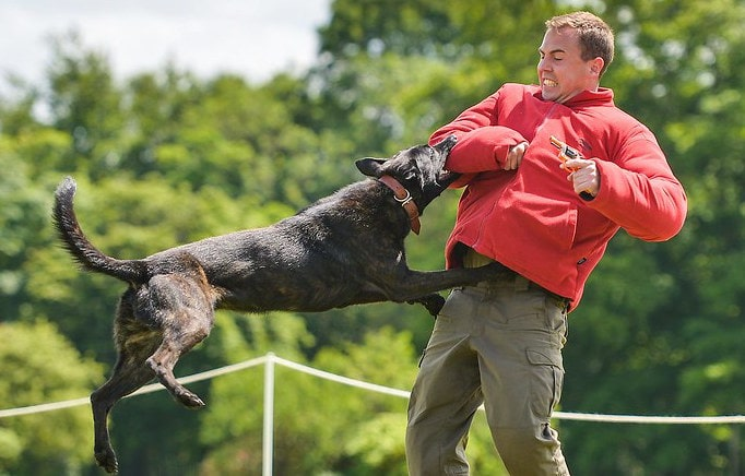 Top 20 Most Aggressive Dog Breeds in world today
