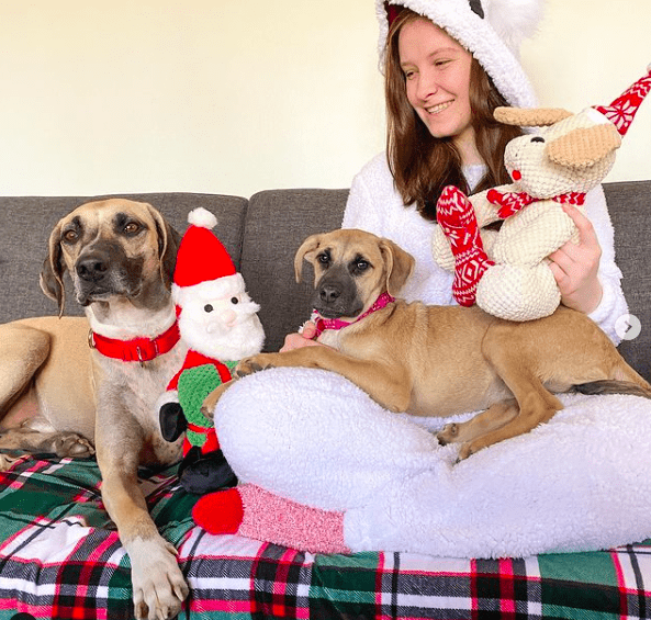 black mouth cur lab mix good with family