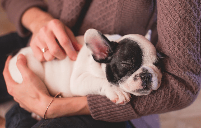 Top 20 facts you need to know before buying a puppy online today!