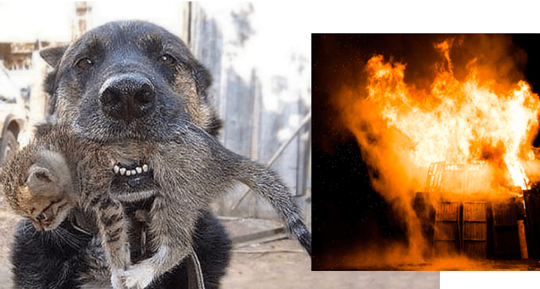 Hero dog risks life to save his cat friend kittens in burning building