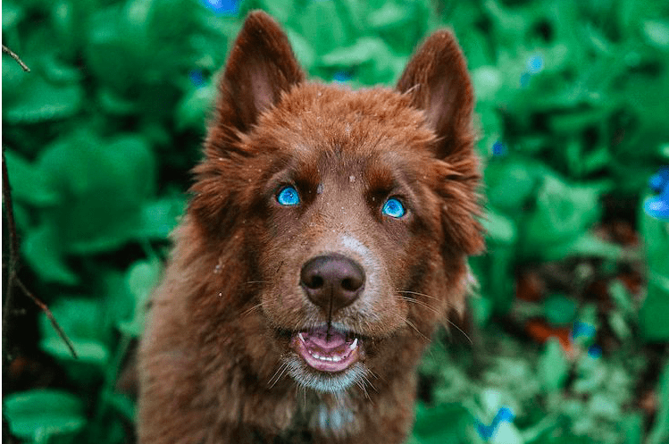Top 20 most beautiful dogs breeds in the world today