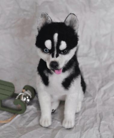 14. Jack Russell + Siberian Husky (Husky Jack)