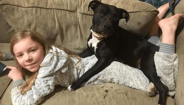 Top 15 best companion dogs breed for men, women and kids