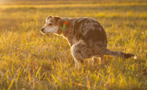 15 shocking facts about why dog poop mucus (Causes and Treatment)