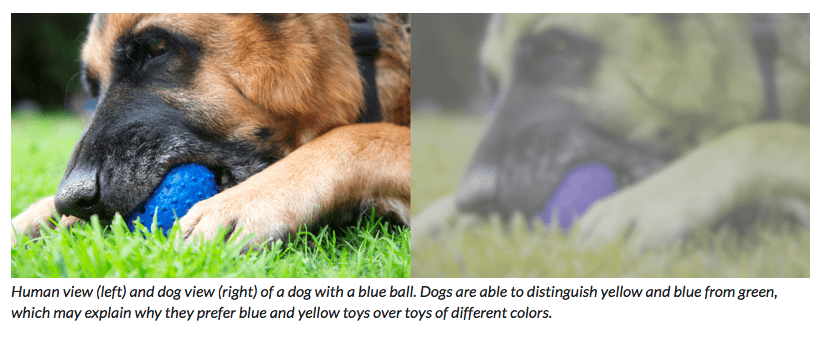 dog vision and colour