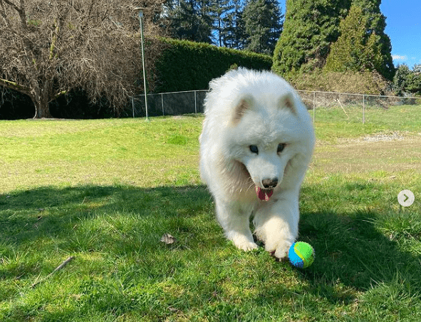 10 facts about Dog Colour Blindness - dog playing ball