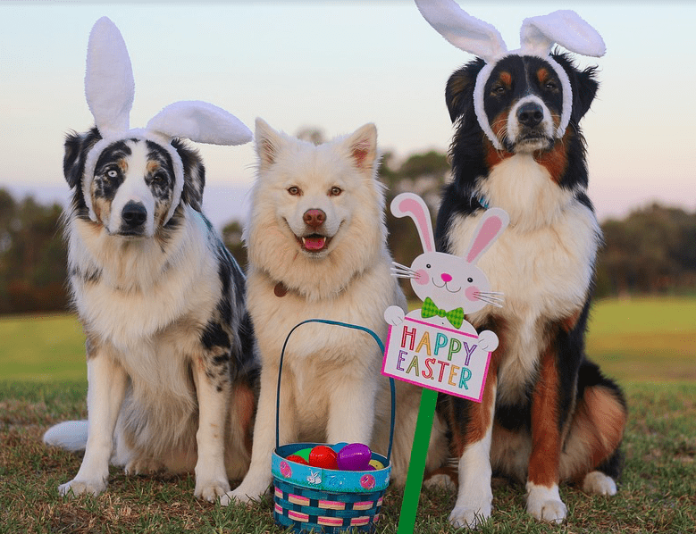 can dogs eat eggs - happy easter