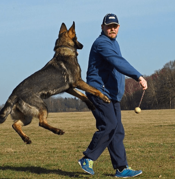 Can a german shepherd kill - What to do if a GSD attacks you
