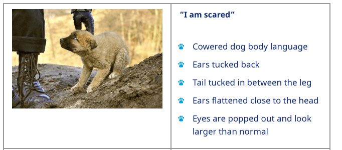 scared dog calming signals