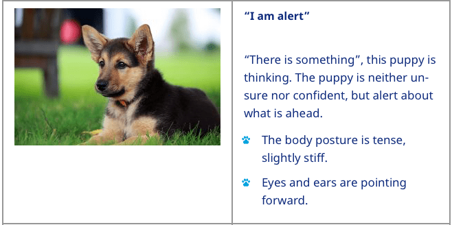 can a german shepherd kill you - dogs calming signals