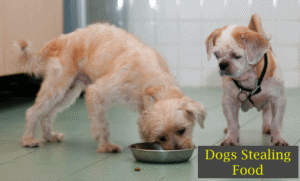why does my dog steal my other dogs food? 10 Tips to stop it