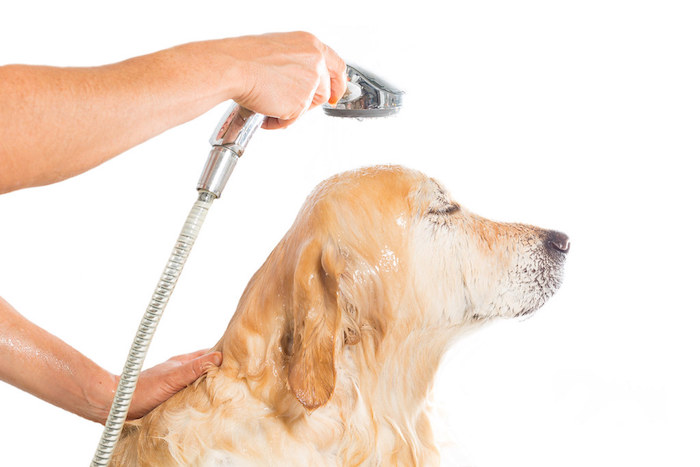 How To Groom A Puppy For The First Time: 15 Tips you need to know