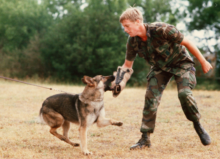 are german shepherd easy to train