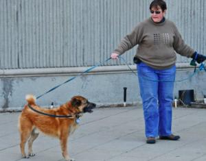 Teach Your Dog Impulse Control