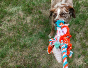 1. Use Special Toys for Dog Play