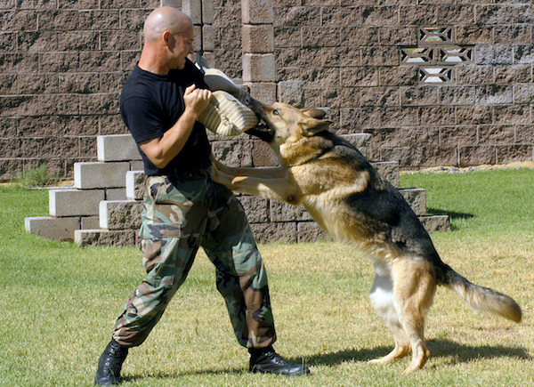Why do German shepherd bite a lot? 6 Tips to Stop Dogs From Biting